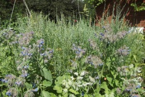 cress and borage resilience garden