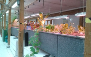 The fish tank and vegetable bed in the Todmorden aquagarden