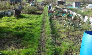 The rough bit of the allotment before digging