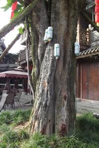 Banyan tree with bottles Chongqing