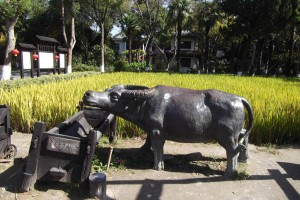 A bronze buffalo beside a rice field