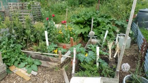 allotment view July 2018