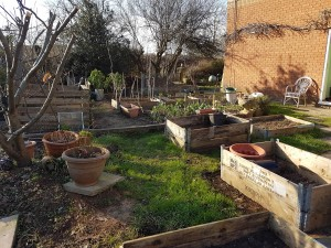 Resilience garden in spring cleared for planting